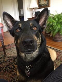 Healthy Dog Food - San Diego pet sitter